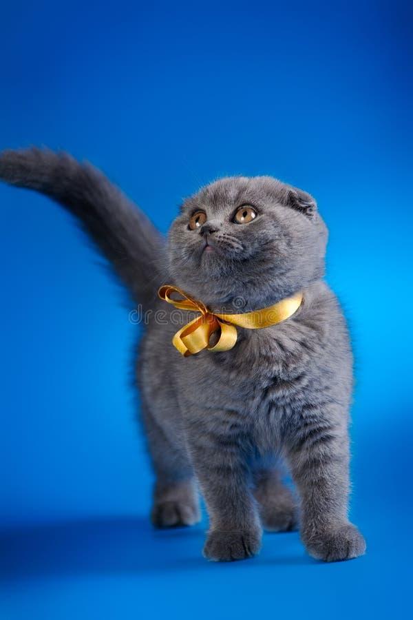 Petit chaton avec le ruban d'or photo stock