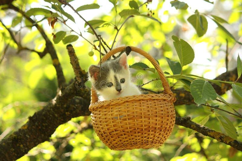 Petit chaton blanc et gris mignon se reposant dans le panier photographie stock libre de droits