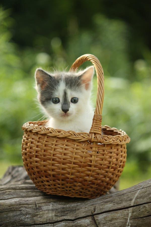 Petit chaton blanc et gris mignon se reposant dans le panier photographie stock