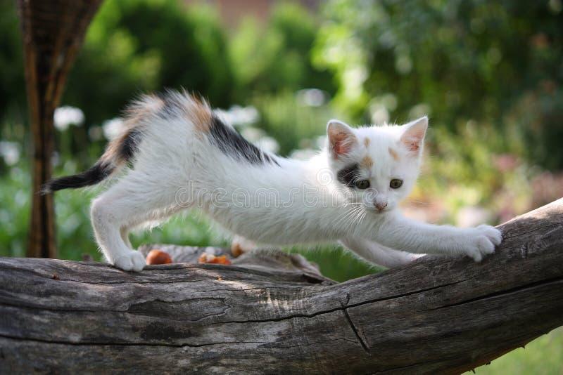 Petit chaton blanc rayant le branchement d'arbre photos stock
