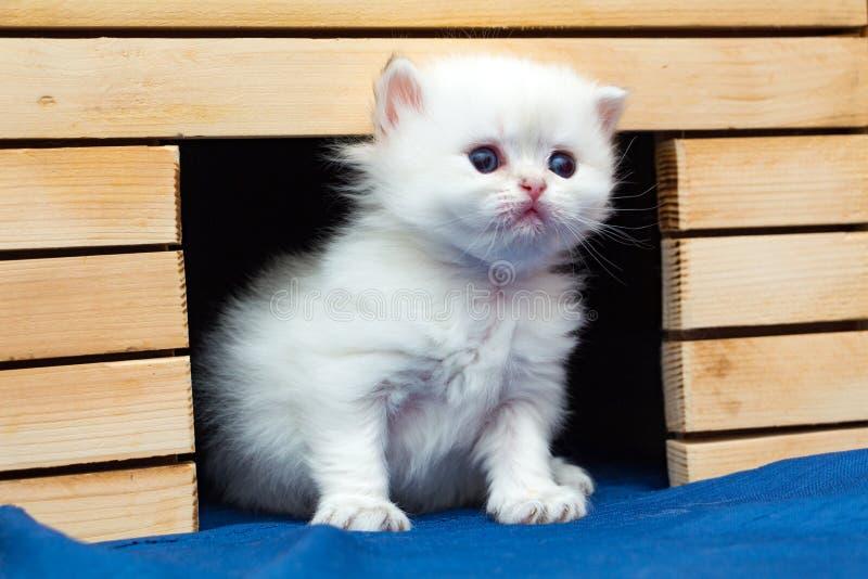 Petit chaton britannique pelucheux blanc se reposant dans une maison de chat faite de bois image stock