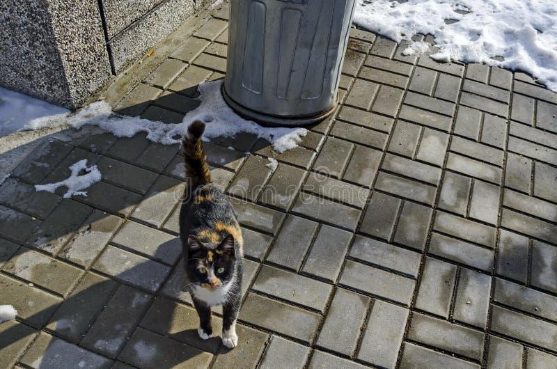 Petit chaton curieux au trottoir de lumière du soleil dans le village Pasarel d'hiver images stock