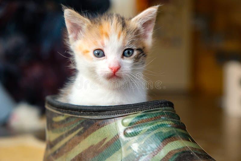 Petit chaton dans la chaussure image libre de droits