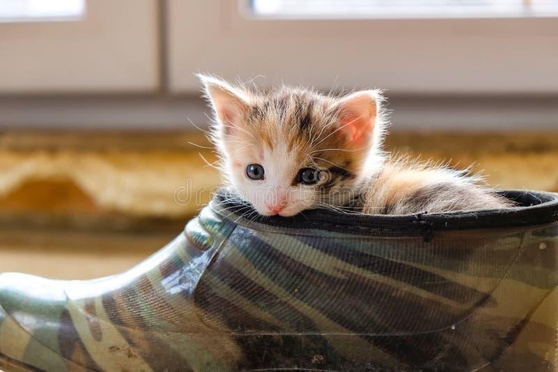 Petit chaton dans la chaussure photo libre de droits