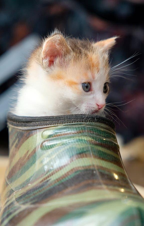 Petit chaton dans la chaussure images libres de droits