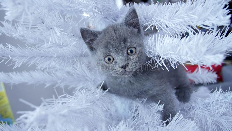 Petit chaton dans un arbre de Noël photographie stock