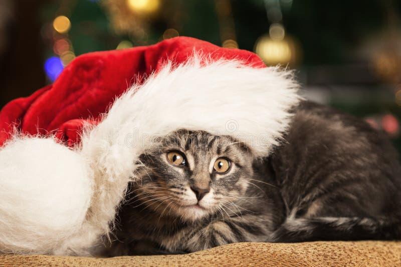 Petit chaton dans un chapeau de Santa Claus photo libre de droits
