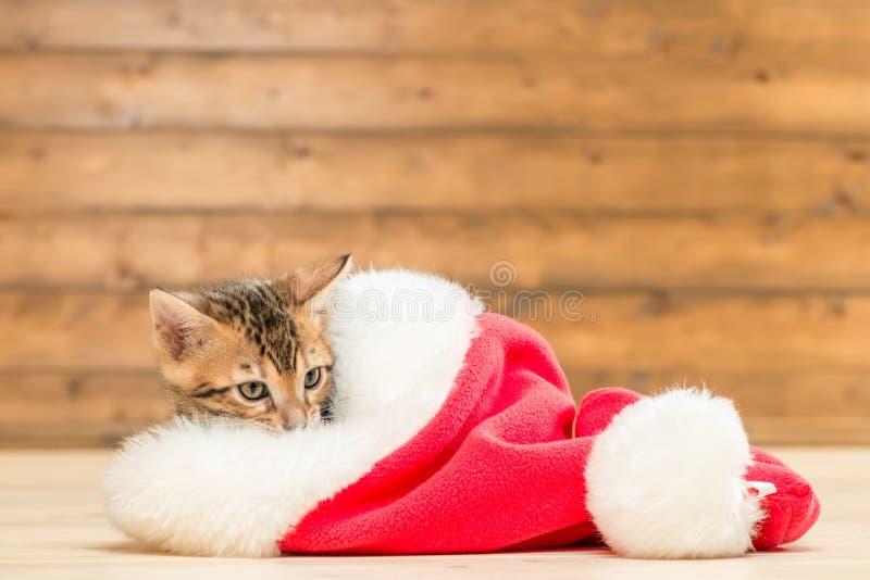 Petit chaton de Brown dans un chapeau rouge de Santa image stock