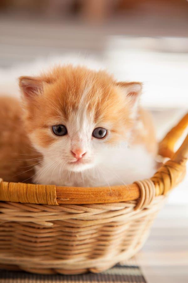 Petit chaton de gingembre dans le panier dans la maison photo libre de droits