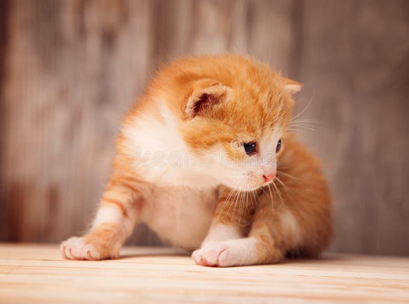 Petit chaton de gingembre sur le fond de vieux conseils en bois photographie stock libre de droits