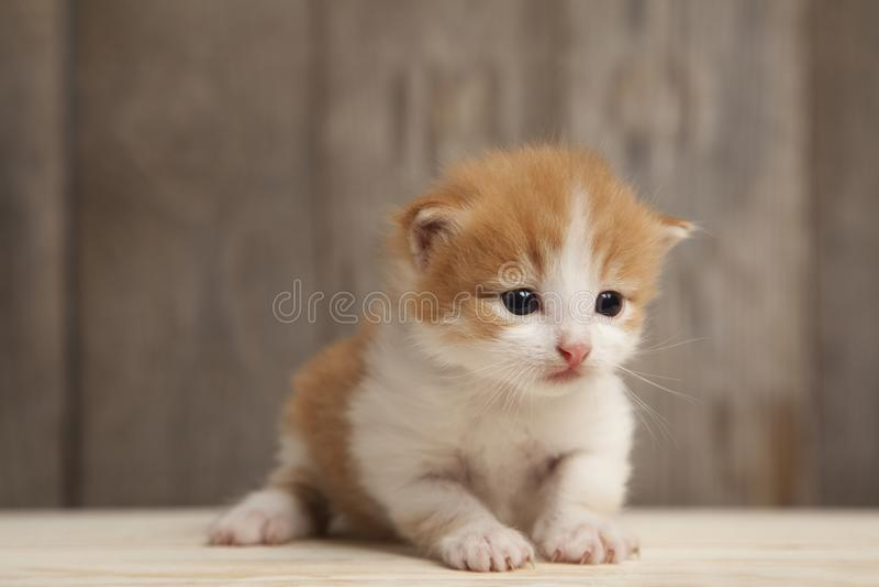 Petit chaton de gingembre sur le fond de vieux conseils en bois photo libre de droits