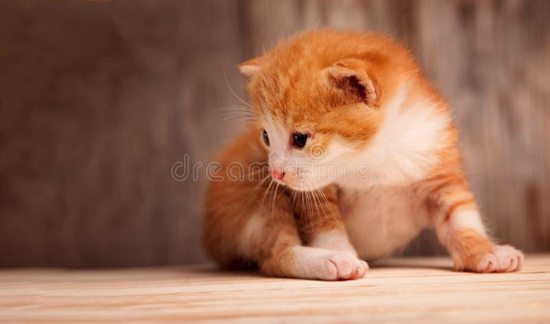 Petit chaton de gingembre sur le fond de vieux conseils en bois image libre de droits