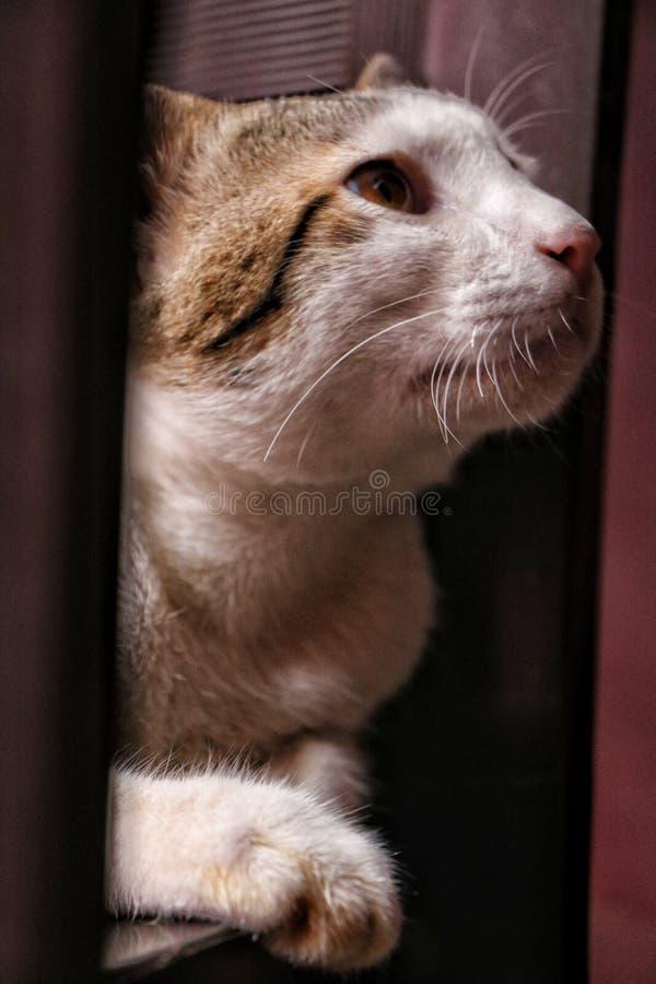 Petit chaton de sommeil image libre de droits