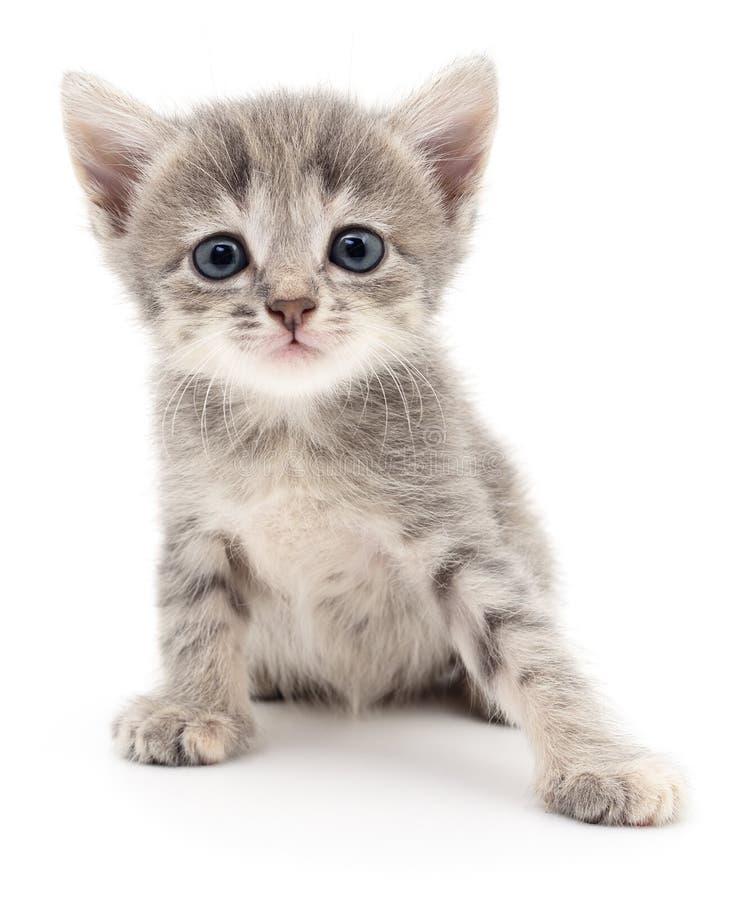 Download Petit chaton gris photo stock. Image du studio, animaux - 77150390