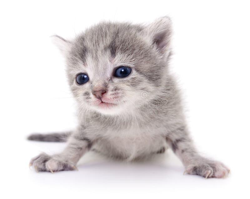 Download Petit chaton gris image stock. Image du image, gris, séance - 77150613