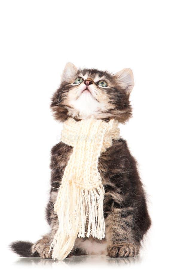 Petit chaton malade images libres de droits