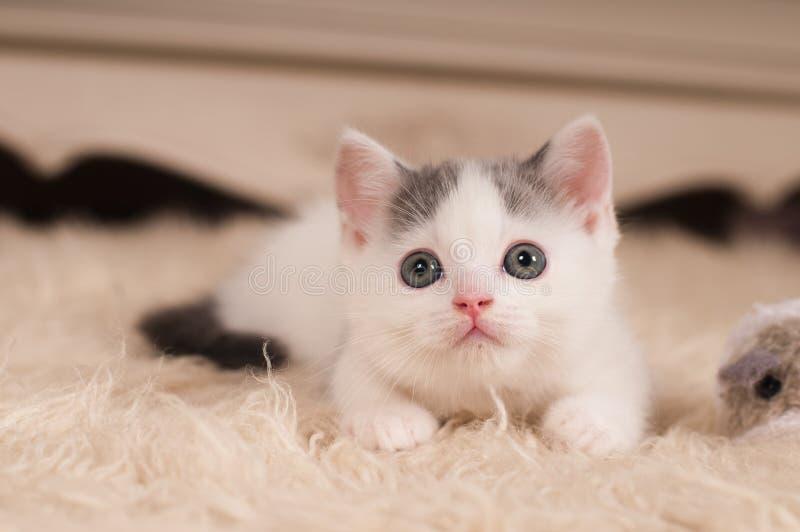 petit chaton mignon photo stock image du int rieur 62593404. Black Bedroom Furniture Sets. Home Design Ideas