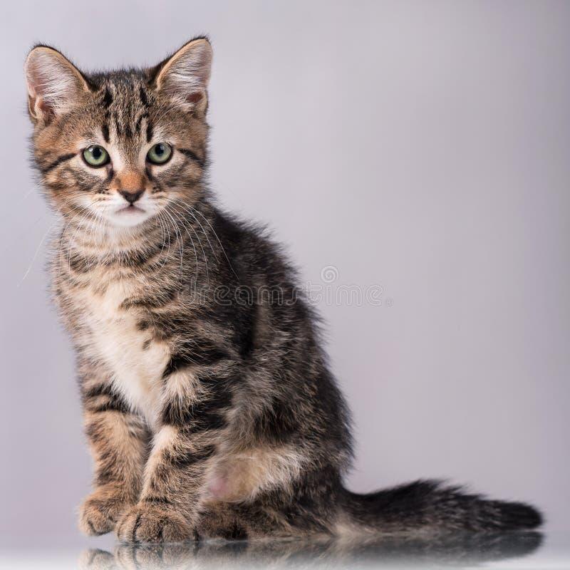 petit chaton mignon image stock image du attention beau 78065759. Black Bedroom Furniture Sets. Home Design Ideas