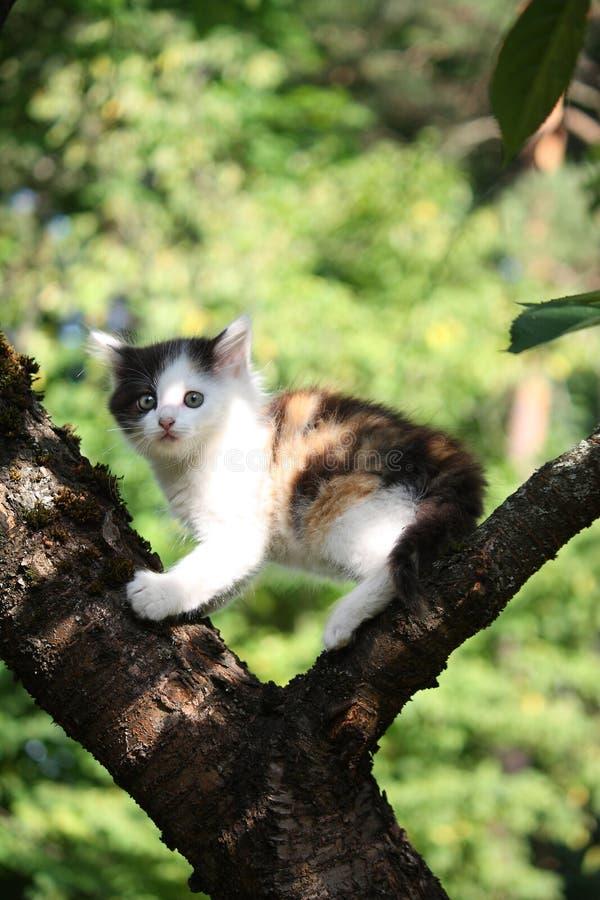 Petit chaton mignon grimpant à l'arbre photographie stock