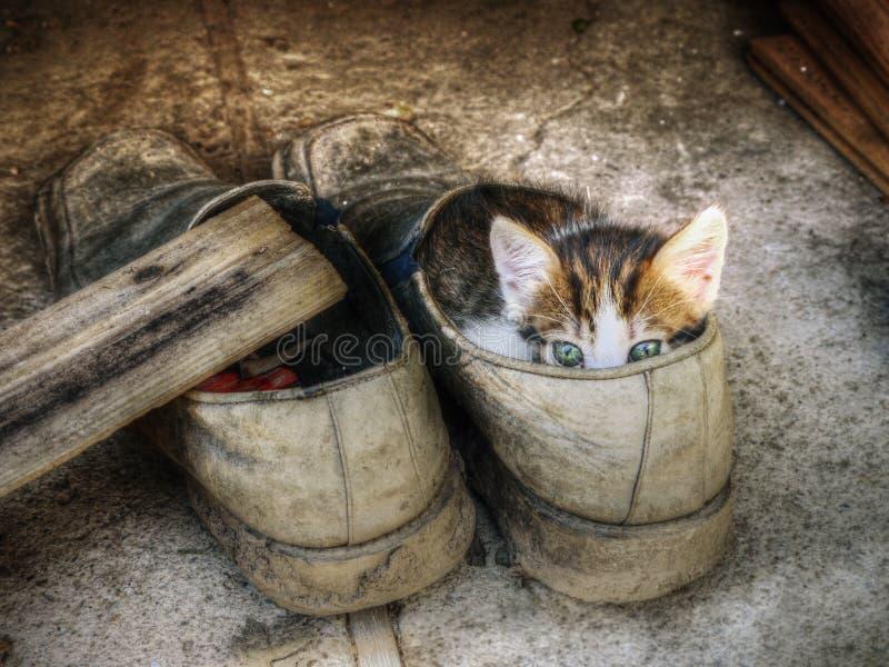 Petit chaton mignon se cachant dans la vieille chaussure au-dessus du fond gris photos stock