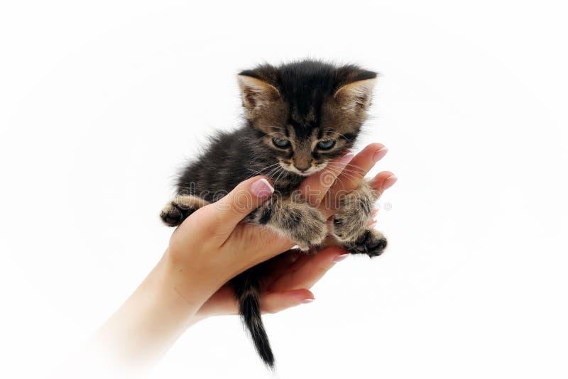Petit chaton mignon se reposant sur les paumes 1 images stock