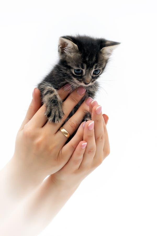 Petit chaton mignon se reposant sur les paumes 5 photos stock