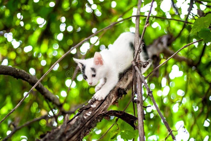 petit chaton mignon sur l 39 arbre dans le jardin photo stock. Black Bedroom Furniture Sets. Home Design Ideas