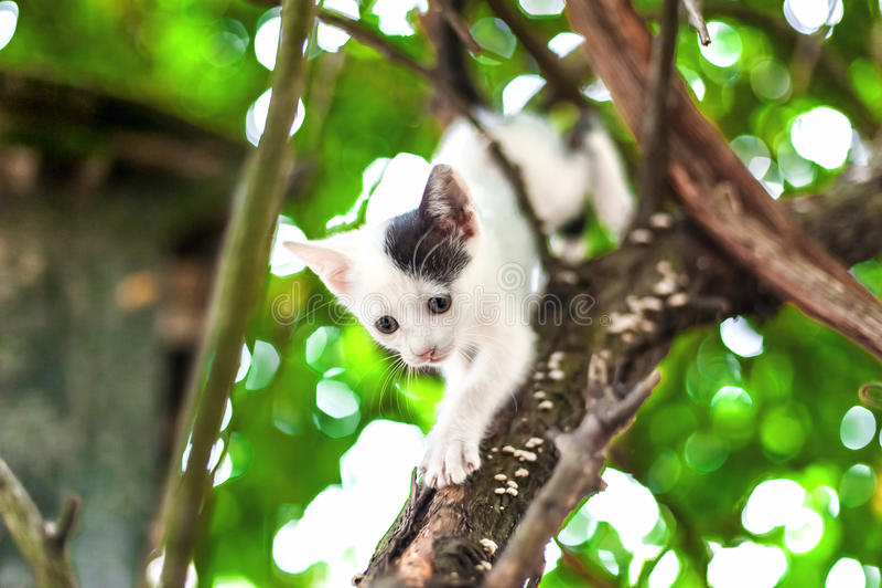Petit chaton mignon sur l'arbre dans le jardin photo stock