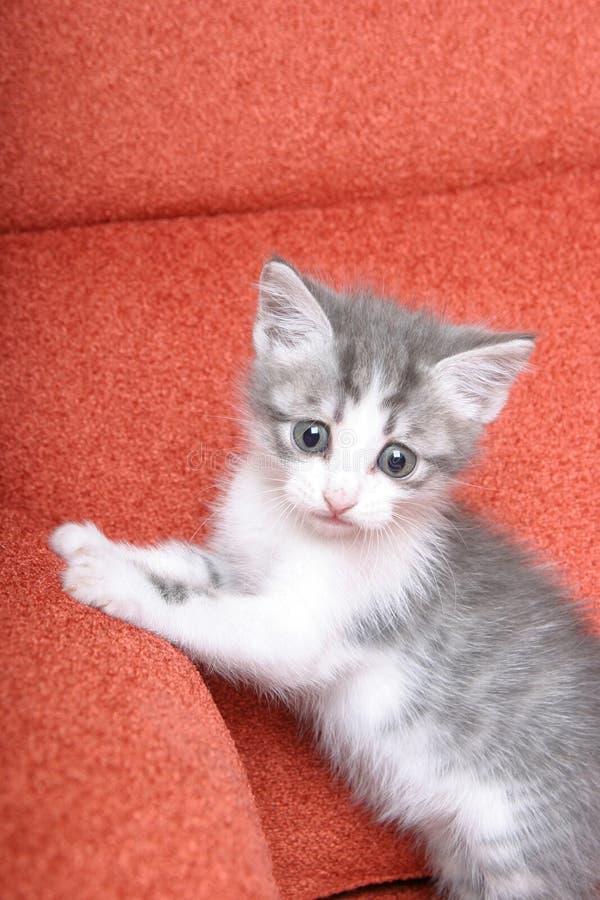 Petit chaton mignon sur le sofa orange lumineux images stock