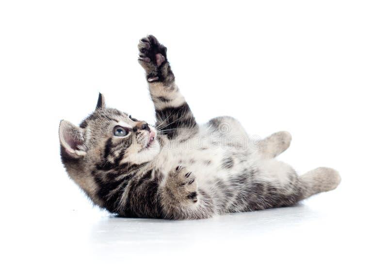 Petit chaton noir écossais se trouvant sur l'étage photos stock