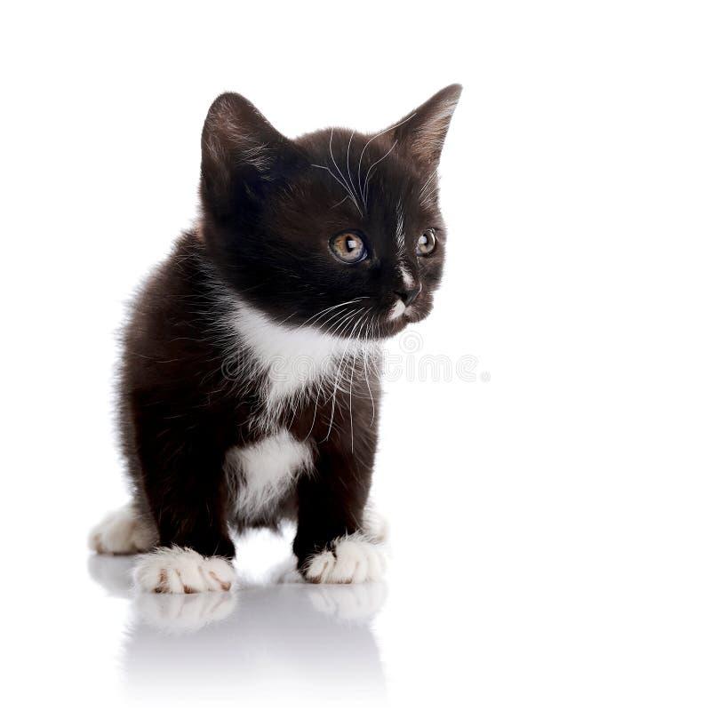 Petit chaton noir et blanc photo libre de droits