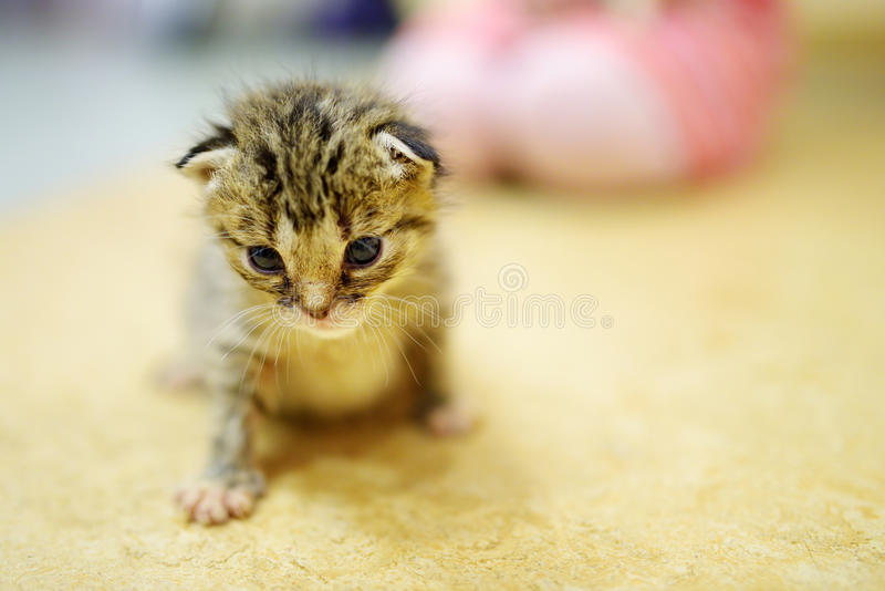 Petit chaton orphelin mignon photographie stock