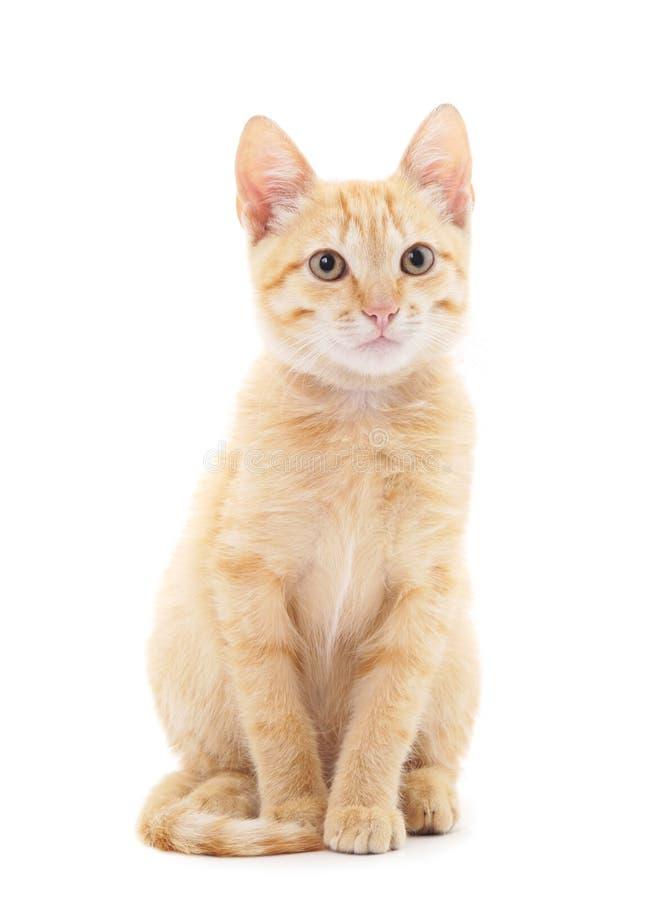 Petit chaton rouge images libres de droits