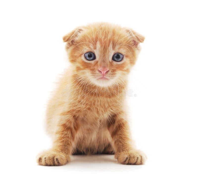 Petit chaton rouge image stock