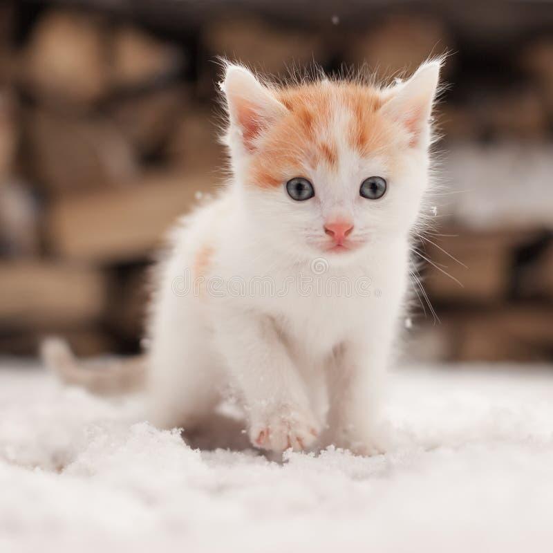 Petit chaton seul rouge sur la neige photo libre de droits