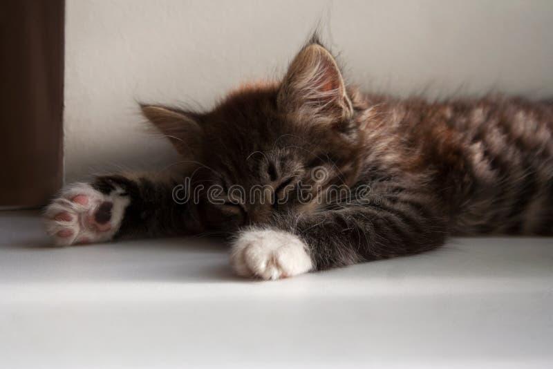 Petit chaton tigré dormant un jour d'été photographie stock