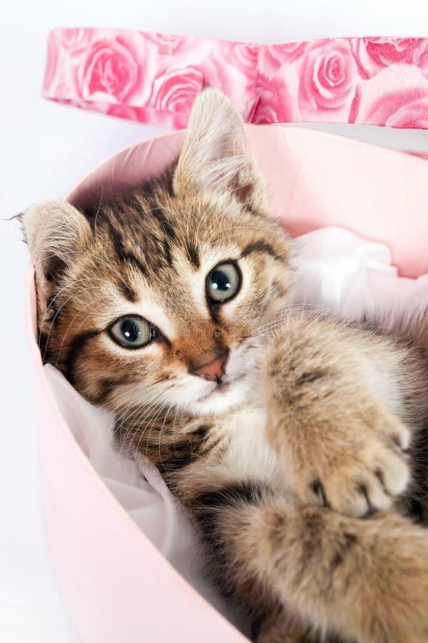 Petit chaton tigré jouant dans une boîte photos stock