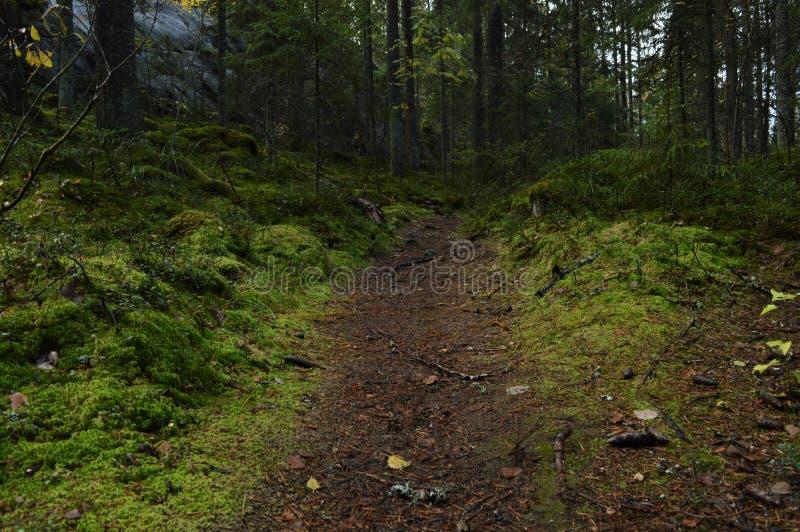 Petit chemin dans la forêt de mousse image stock