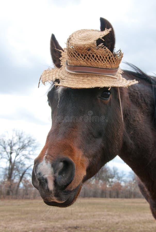 Petit cheval Arabe mignon utilisant un chapeau photo libre de droits