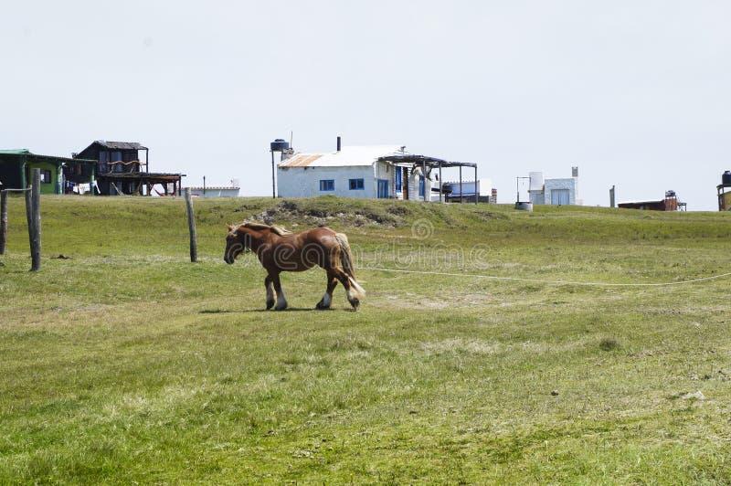 Petit cheval brun dans le domaine photo stock