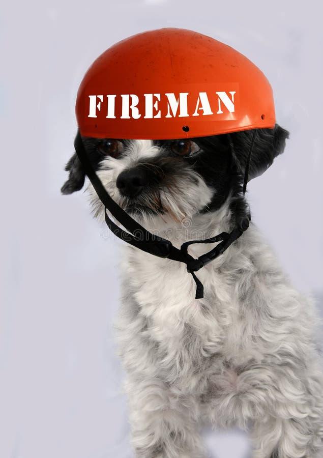 Petit chien mignon avec de grands yeux portant le casque de pompier photo libre de droits
