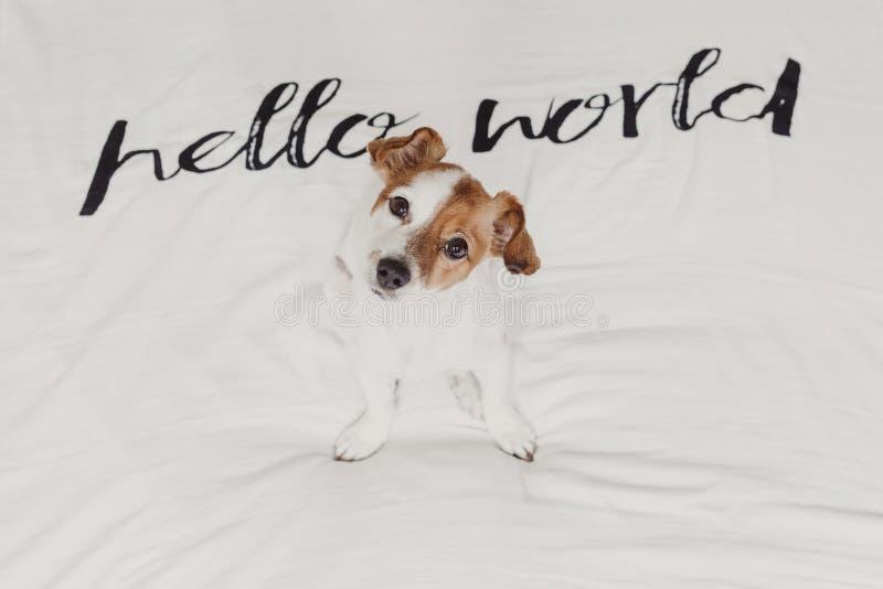 Petit chien mignon se reposant sur le lit feuille blanche avec bonjour le message du monde Animaux familiers ? l'int?rieur d?tend images stock
