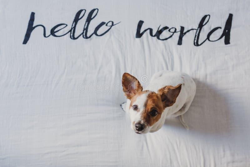 Petit chien mignon se reposant sur le lit feuille blanche avec bonjour le message du monde Animaux familiers ? l'int?rieur d?tend photos libres de droits