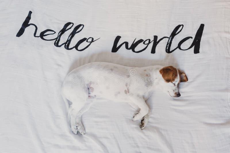 Petit chien mignon se trouvant sur le lit feuille blanche avec bonjour le message du monde Animaux familiers ? l'int?rieur d?tend photos libres de droits