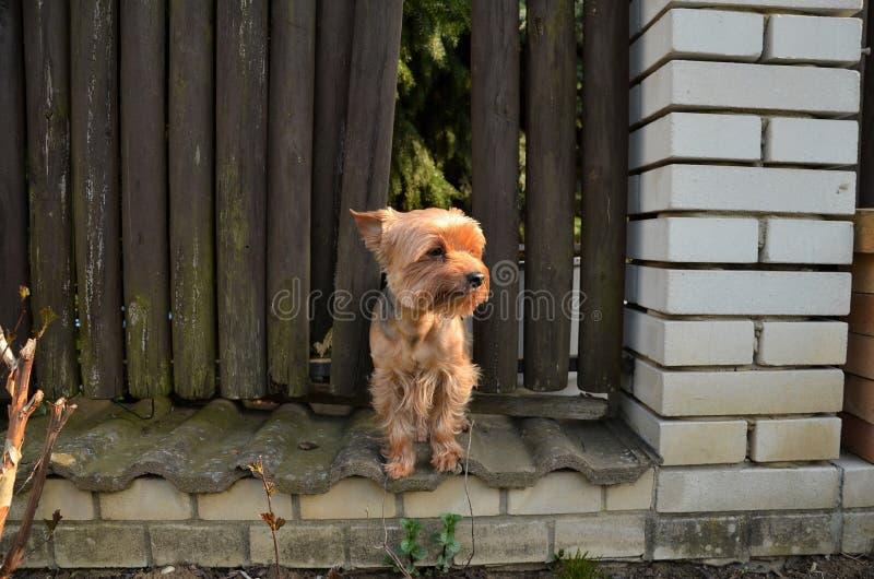 Petit chien seul se tenant photo stock