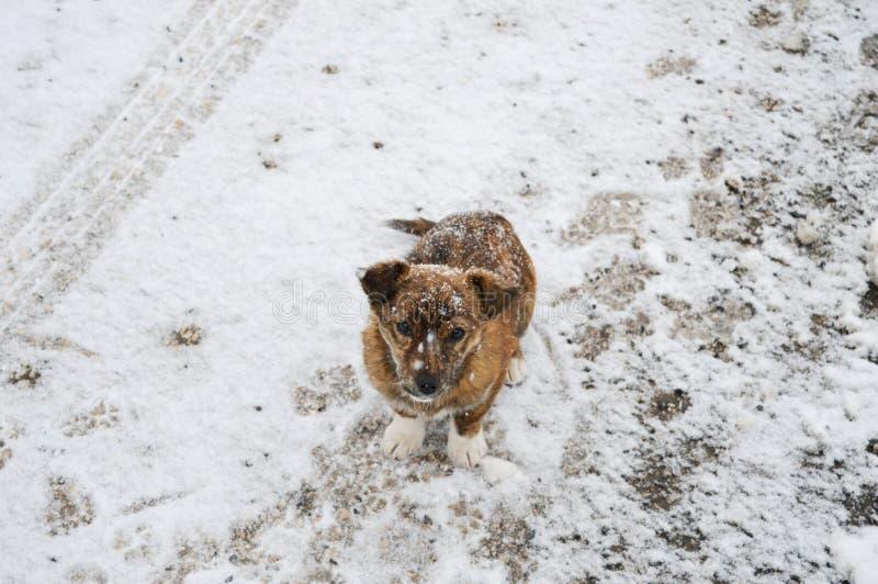 Petit chien sur la neige images stock