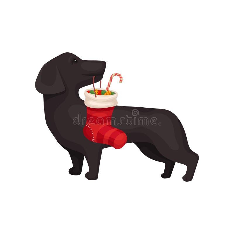 Petit chien tenant le bas de Noël avec des sucreries Cadeau doux Animal familier à la maison Conception plate de vecteur illustration libre de droits