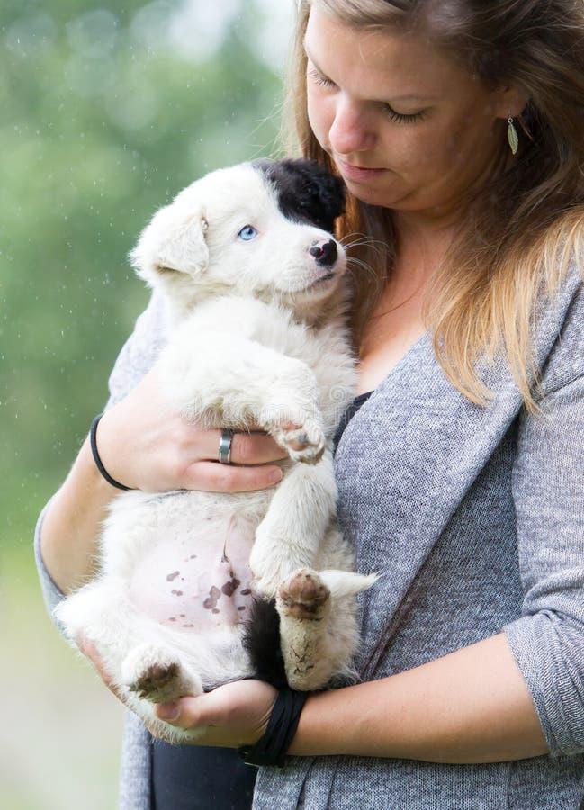 Petit chiot de border collie avec l'oeil bleu dans les bras d'une femme photographie stock