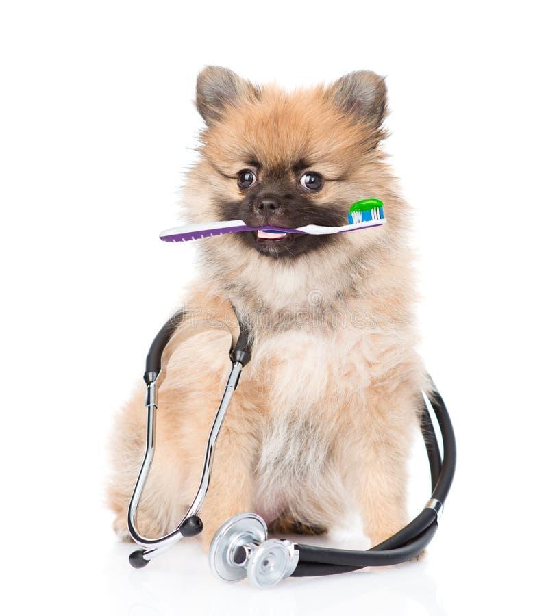 Petit chiot de chiot de spitz avec une brosse à dents et un stéthoscope D'isolement sur le blanc photo libre de droits