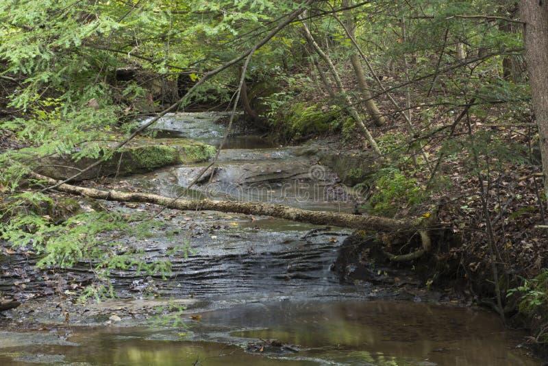 Petit courant dans la forêt d'état de collines de Hocking image stock